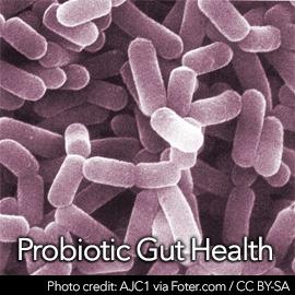 ProbioticGutHealthtemp-D